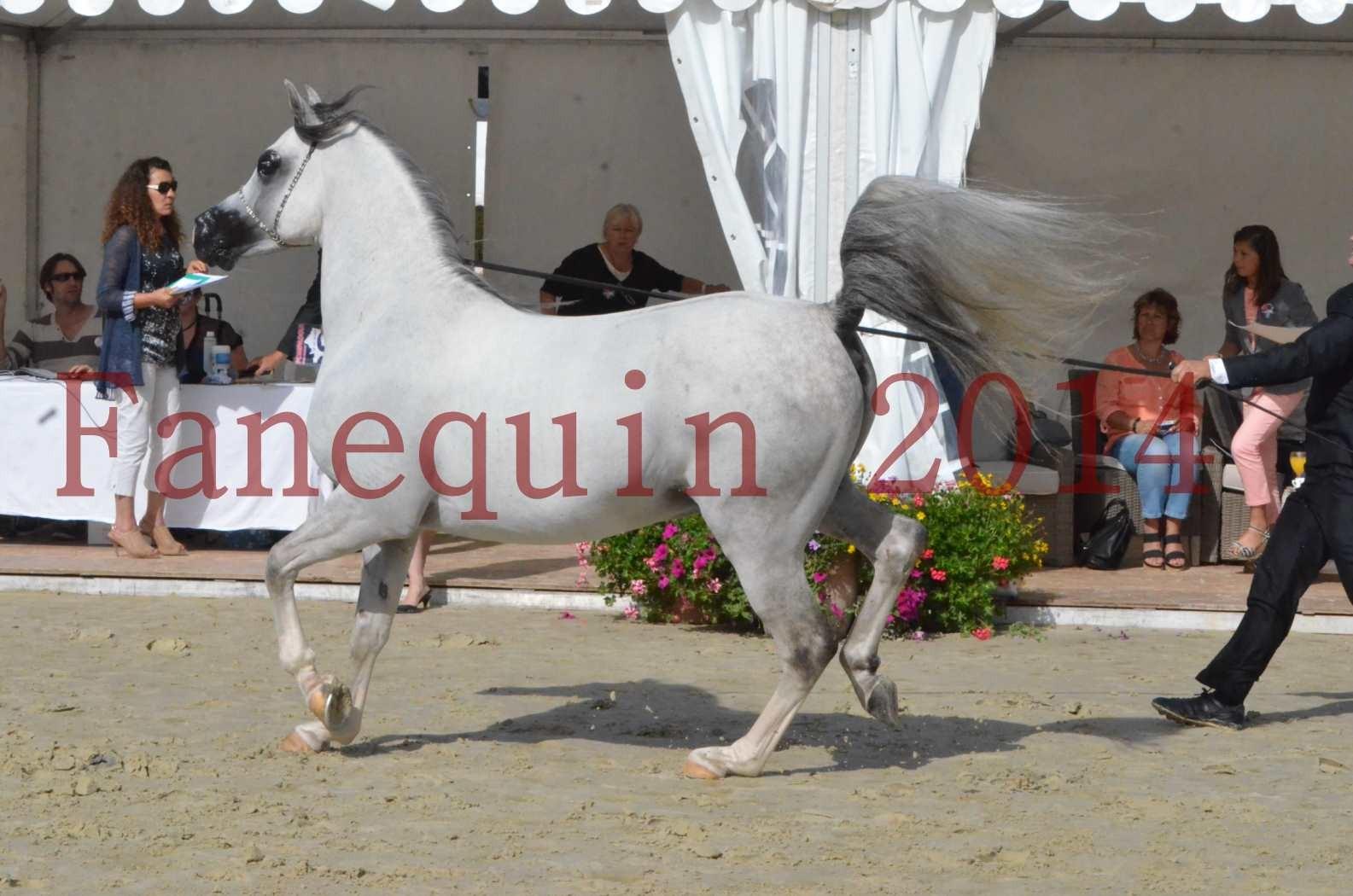 CHAMPIONNAT DE FRANCE  2014 A POMPADOUR - Sélection - SHAOLIN DE NEDJAIA - 27