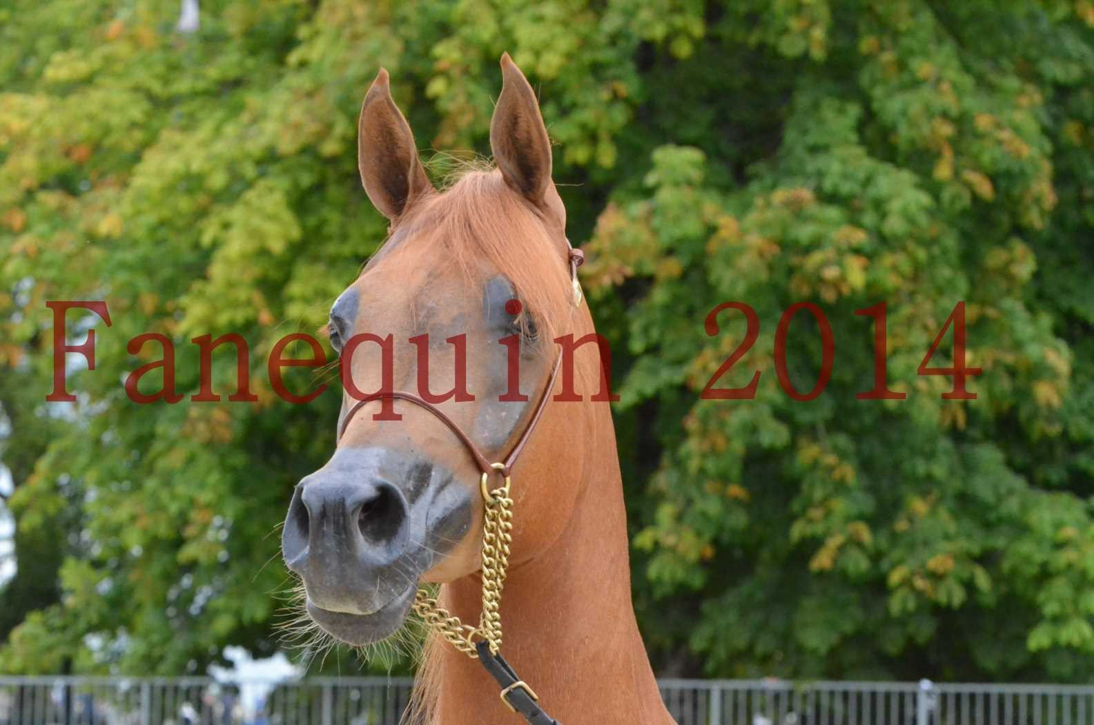 CHAMPIONNAT DE FRANCE 2014 A POMPADOUR - Sélection - LUTFINAH JA - 06