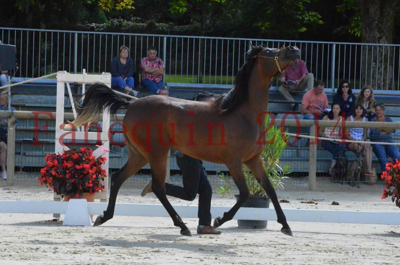 Championnat de FRANCE 2014 - Amateurs - KAL'ELLE D'ELHORIA - 44