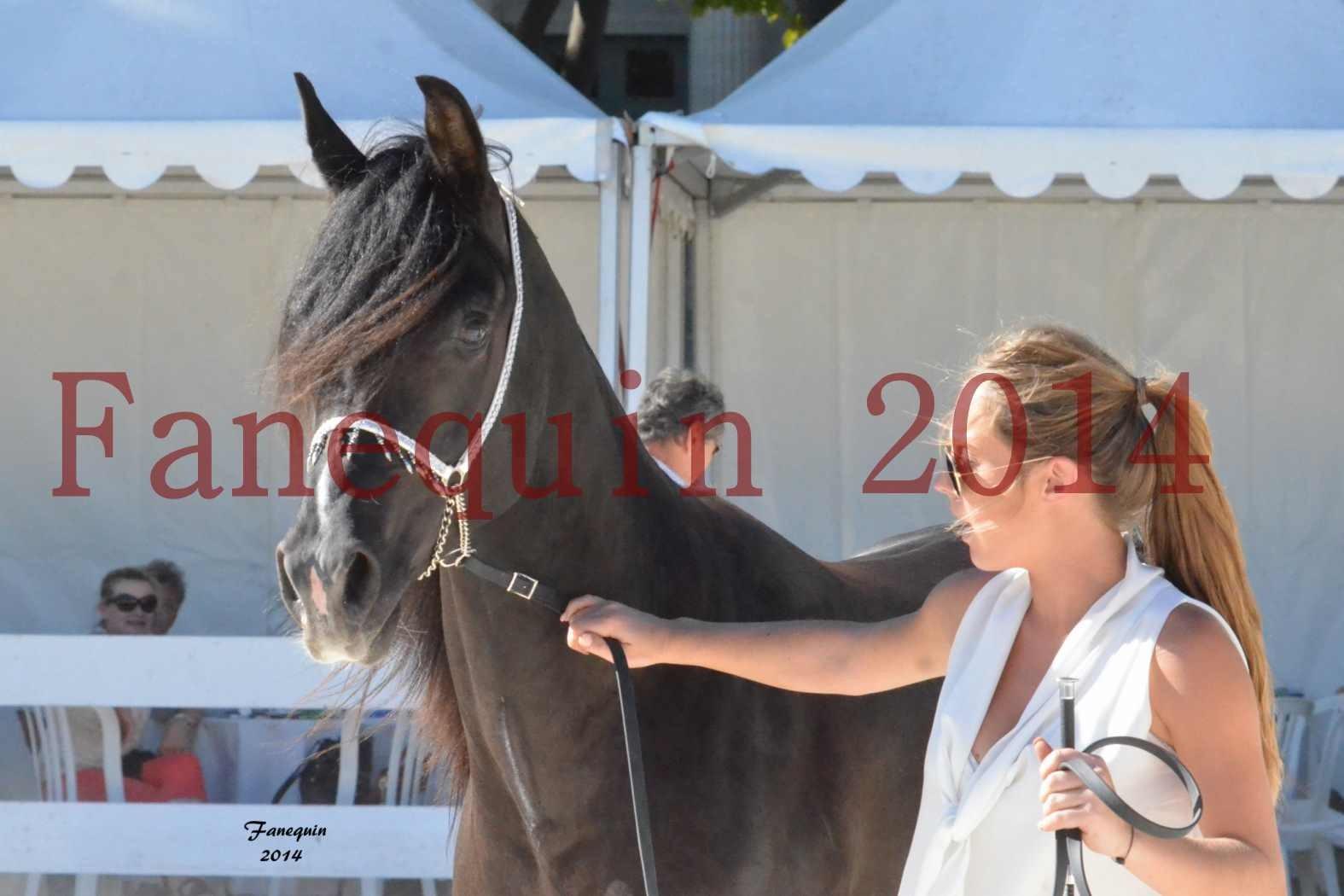 Concours National de Nîmes de chevaux ARABES 2014 - Notre Sélection - Portraits - BALTYK DE CHAUMONT - 5