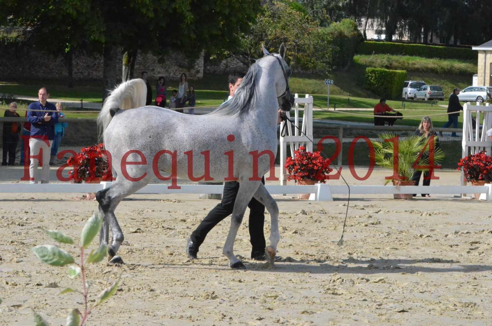 CHAMPIONNAT DE FRANCE  2014 A POMPADOUR - Sélection - SHEYK DE GARGASSAN - 08