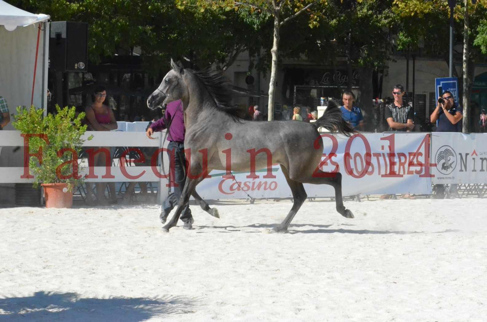 Concours National de Nîmes de chevaux ARABES 2014 - Championnat - JOSEPH'S BOUZIOLS - S 09