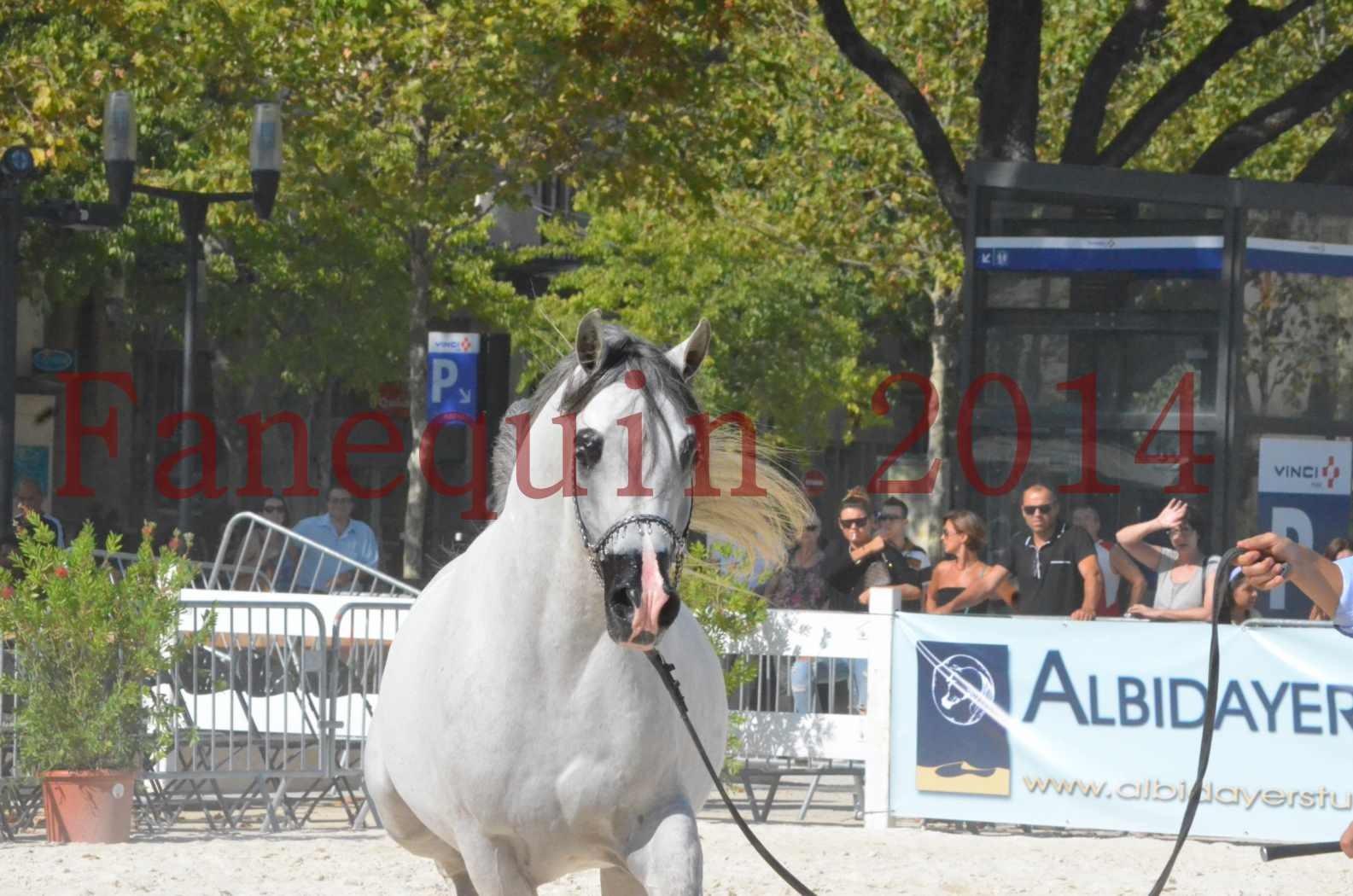 Concours National de Nîmes de chevaux ARABES 2014 - Championnat - SHAOLIN DE NEDJAIA - 26