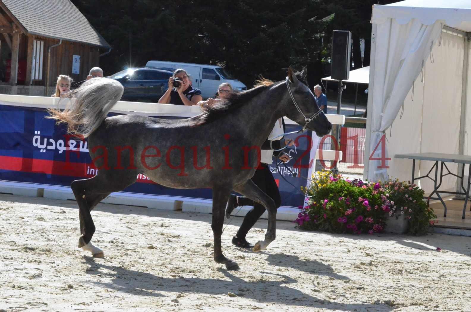 Championnat de FRANCE 2014 - Amateurs - CHTI KAID D'AUBIN - 32