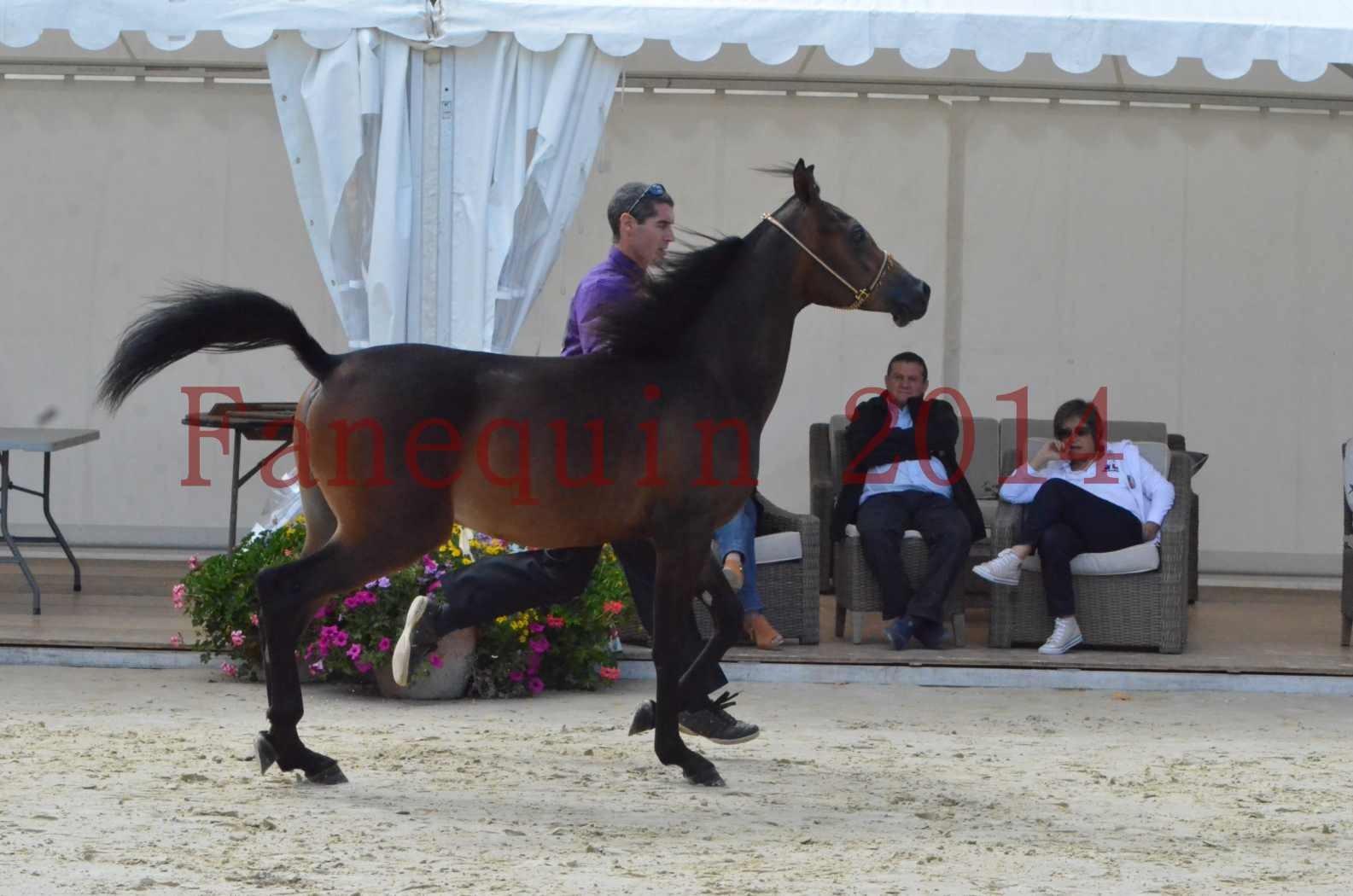 Championnat de FRANCE 2014 - Amateurs - SH FARAJAA - 15