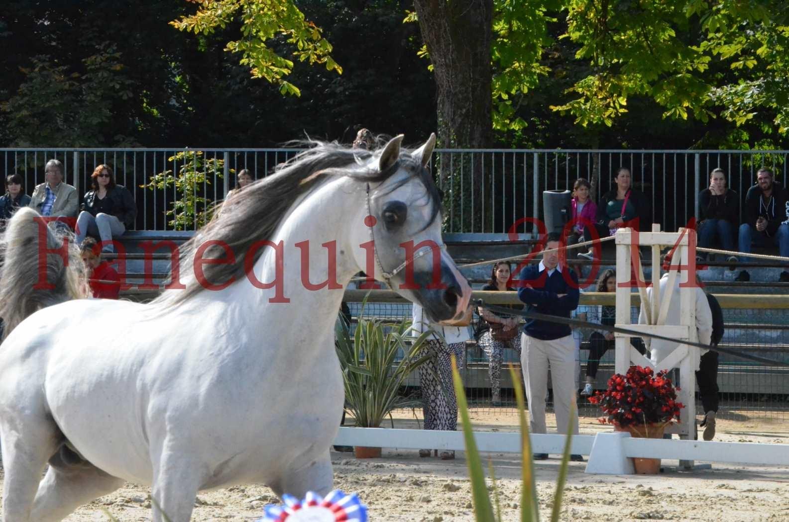 CHAMPIONNAT DE FRANCE  2014 A POMPADOUR - Sélection - SHAOLIN DE NEDJAIA - 46