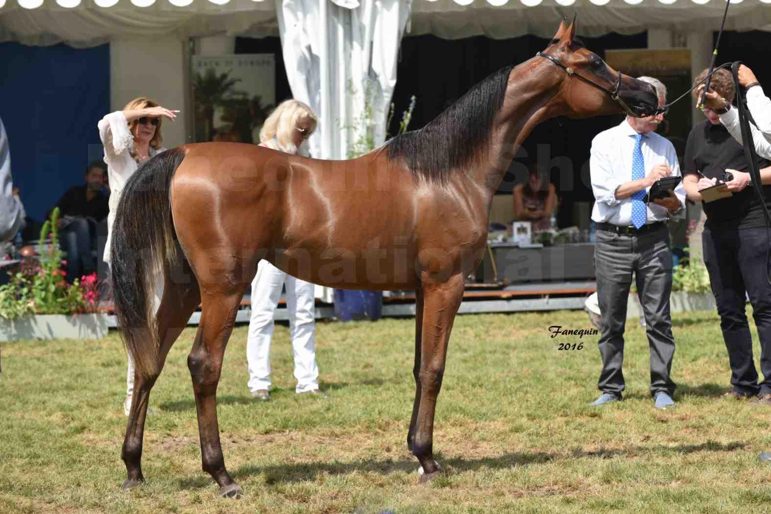 International Arabian Horse Show B de VICHY 2016 - ASRAR MS - Notre Sélection - 7