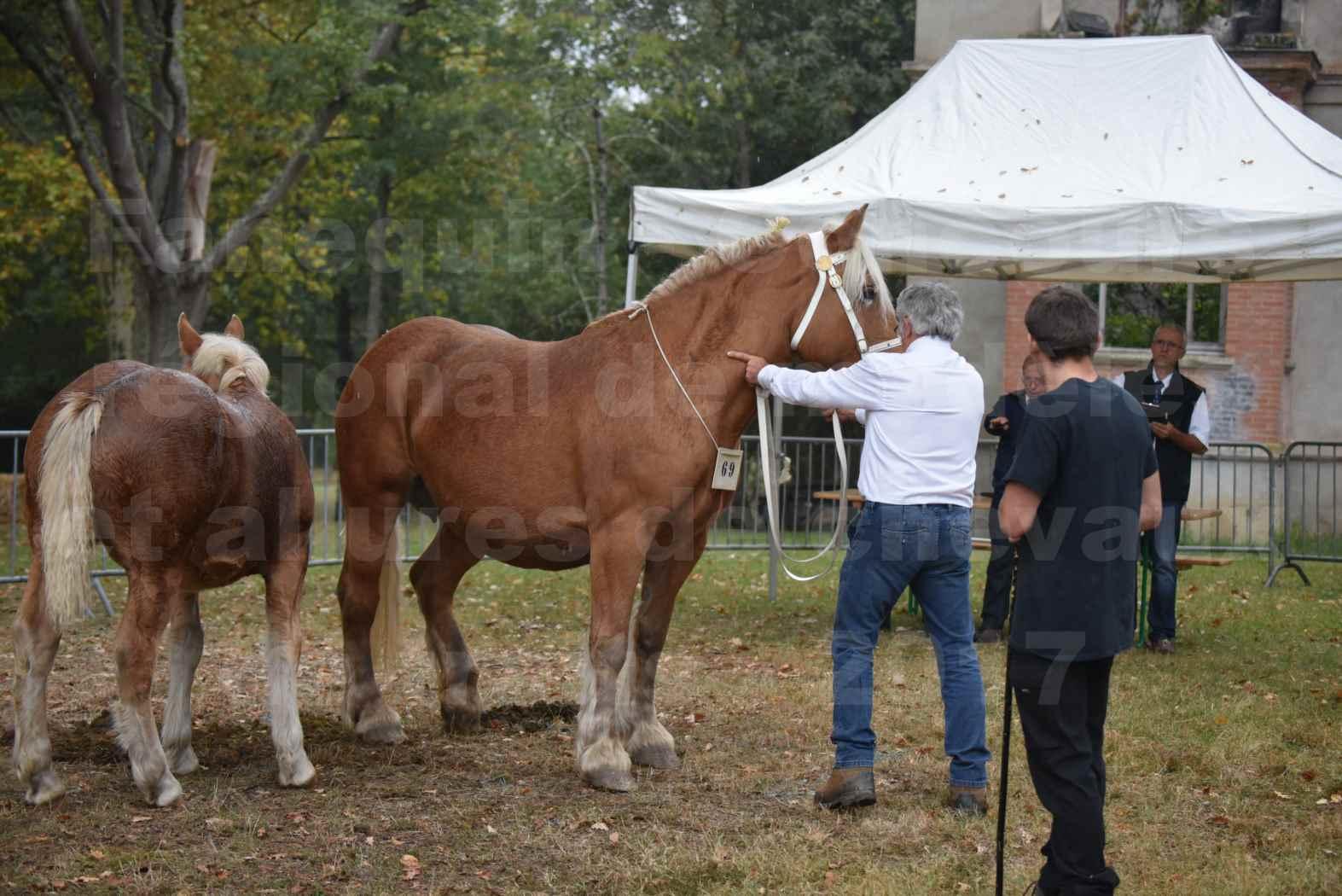 Concours Régional de chevaux de traits en 2017 - Trait COMTOIS - Jument suitée - ROXANE D'USSON - 02