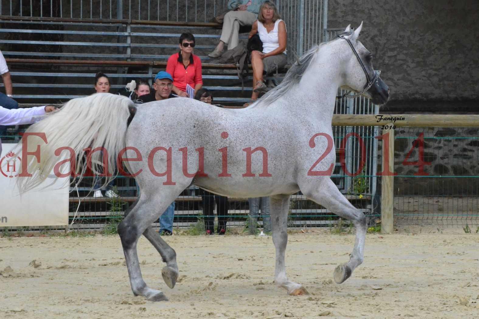 CHAMPIONNAT DE FRANCE  2014 A POMPADOUR - Notre Sélection - SHEYK DE GARGASSAN - 08