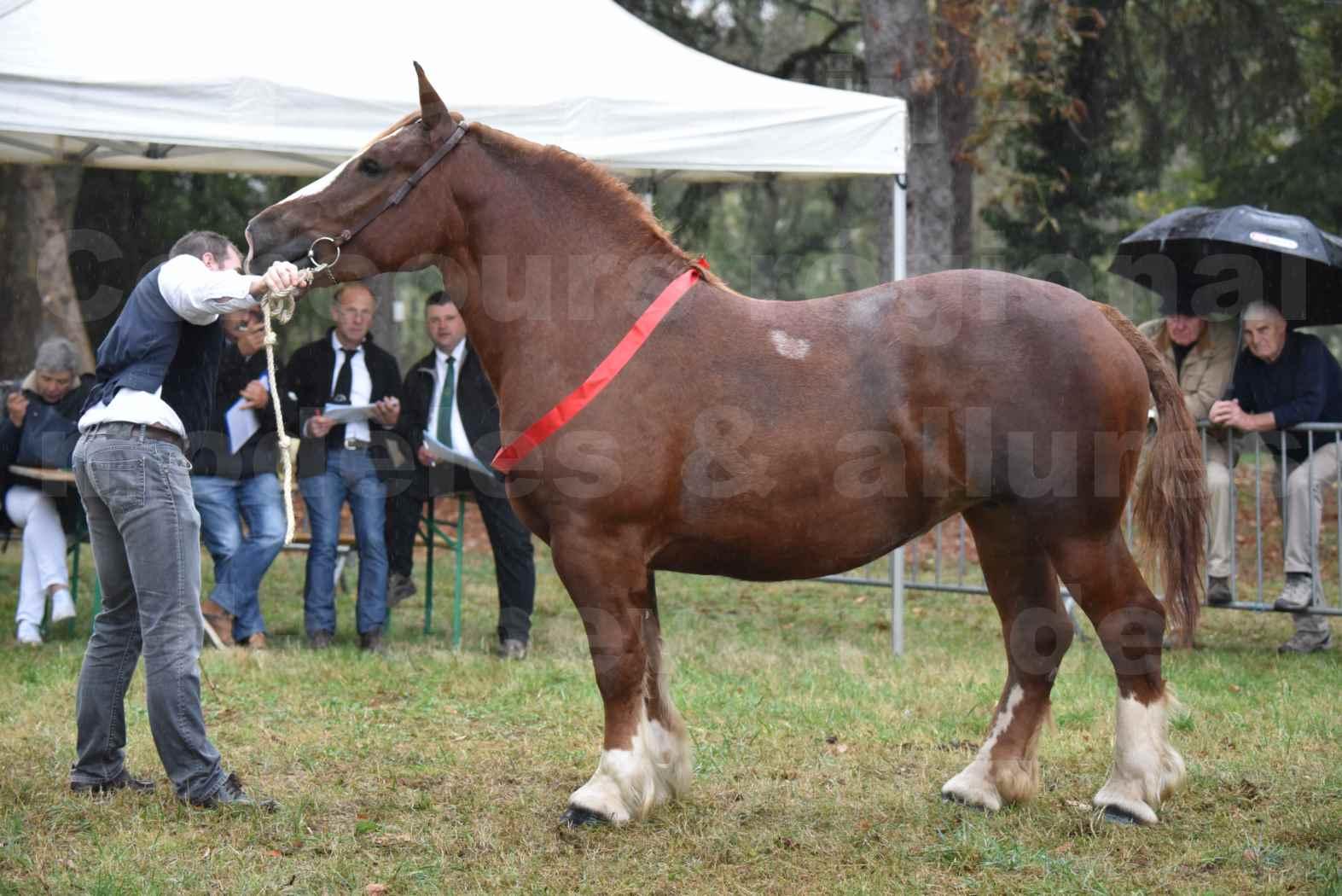 Concours Régional de chevaux de traits en 2017 - Pouliche trait BRETON - EDEN DE LA MOTTE - 11