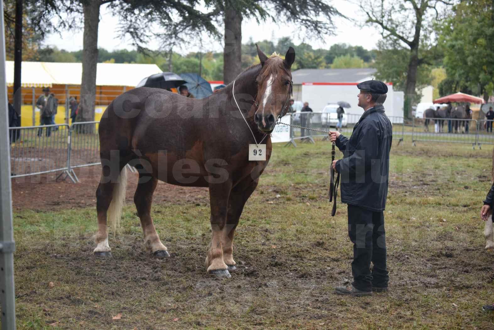 Concours Régional de chevaux de traits en 2017 - Jument Suitée - Trait BRETON - URIELLE DE LA MARGUE - 06