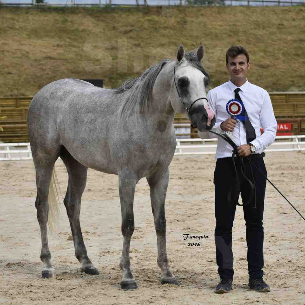 Show national de chevaux arabe à CHAZEY sur AIN - ANWAR ISHANE - 6