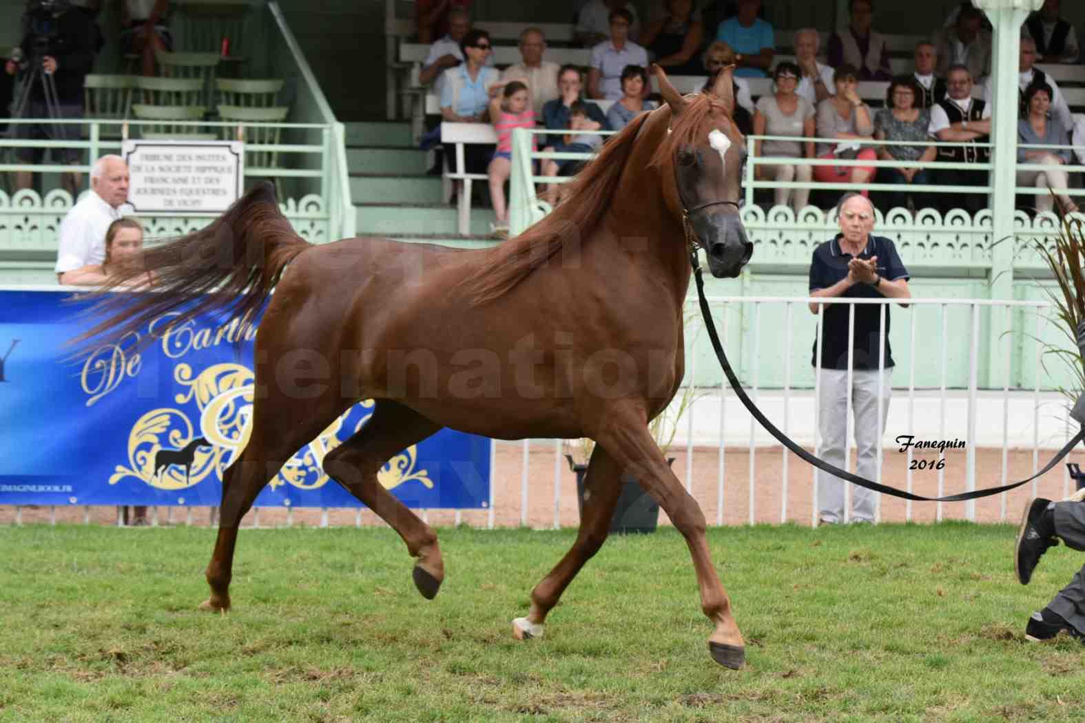 International Arabian Horse Show B de VICHY 2016 - PEARL DE DJOON - Notre Sélection - 12