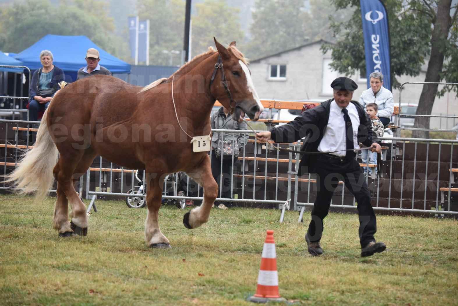 Concours Régional de chevaux de traits en 2017 - Trait BRETON - FLO DE LA MARGUE - 17