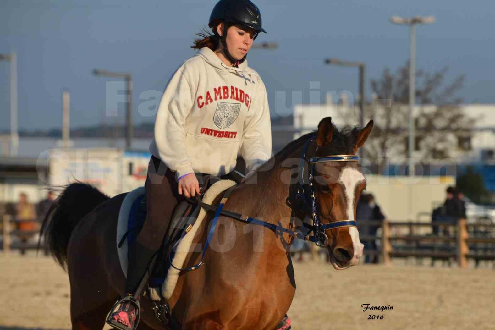 Cheval Passion 2016 - Présentation extérieure de chevaux Arabes montés - 07