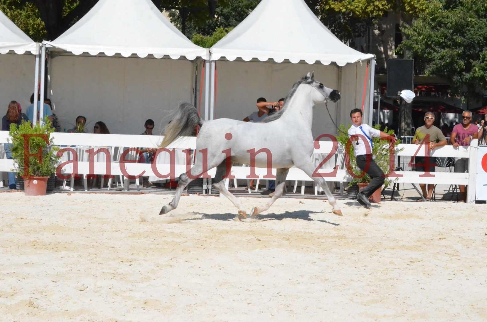 Concours National de Nîmes de chevaux ARABES 2014 - Sélection - SHAOLIN DE NEDJAIA - 08