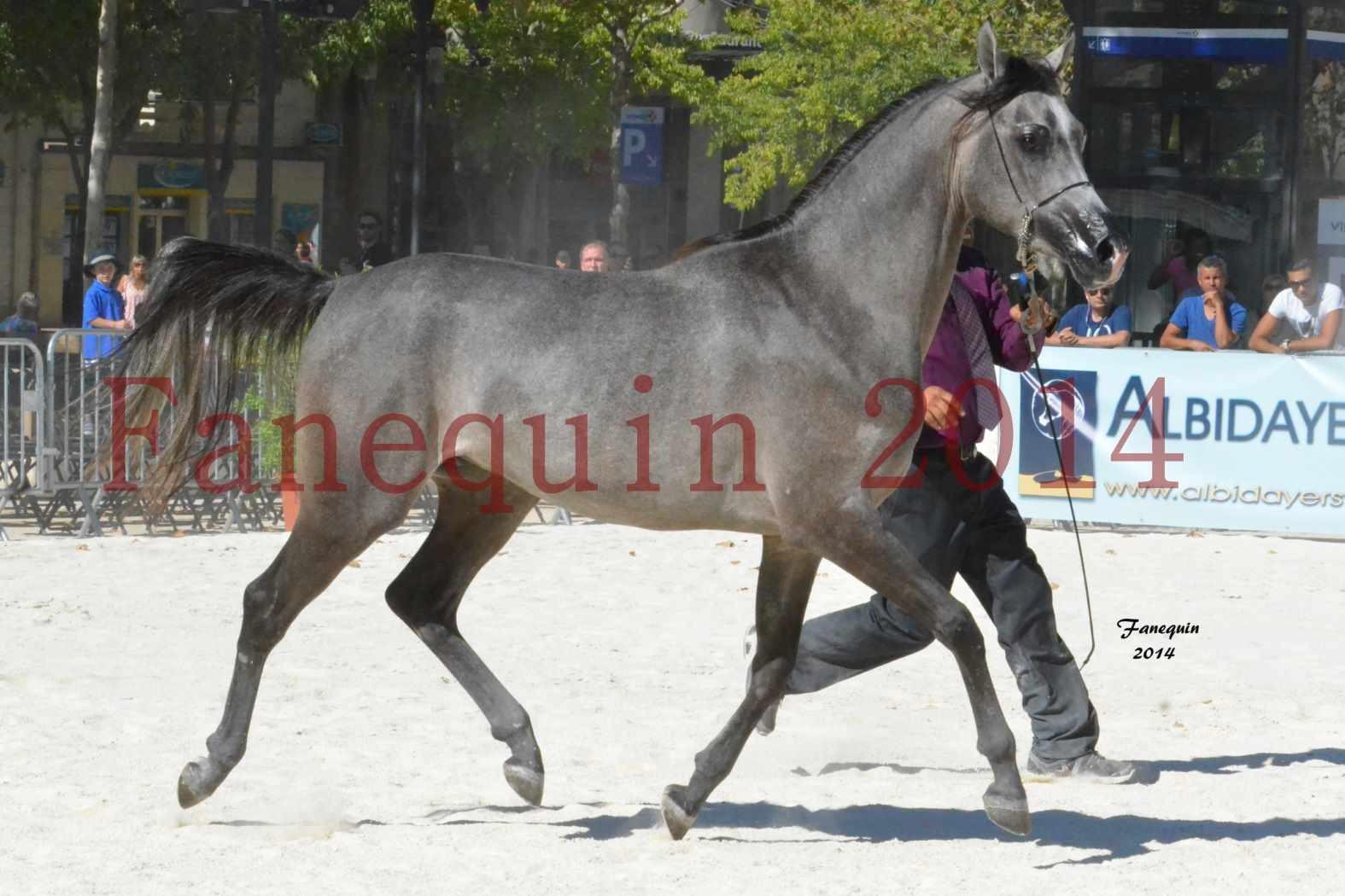 Concours National de Nîmes de chevaux ARABES 2014 - Notre Sélection - JOSEPH'S BOUZIOLS - 17