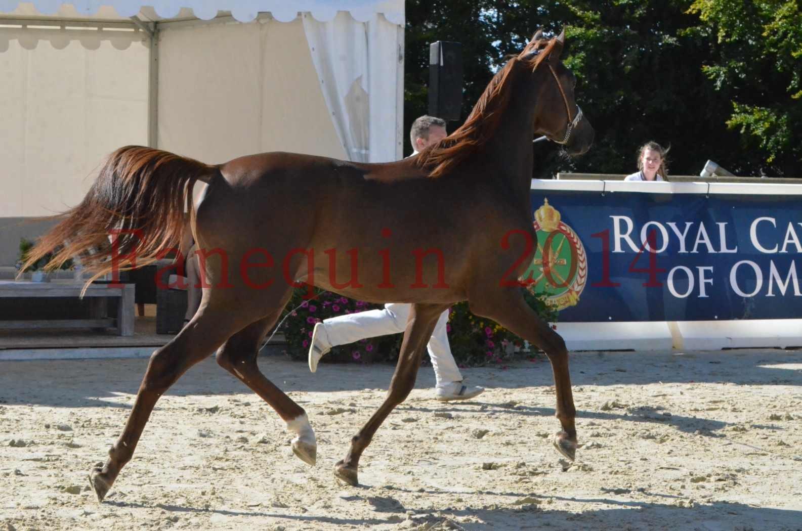 Championnat de FRANCE 2014 - Amateurs - LAMAL - 42