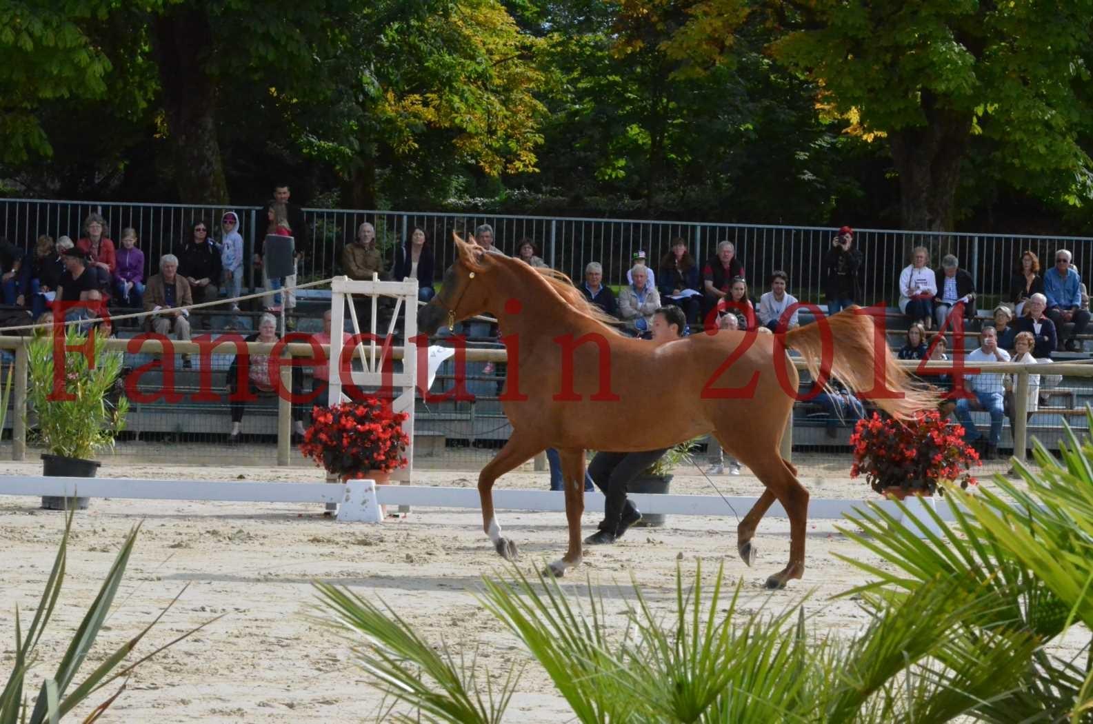 CHAMPIONNAT DE FRANCE 2014 A POMPADOUR - Sélection - LUTFINAH JA - 19