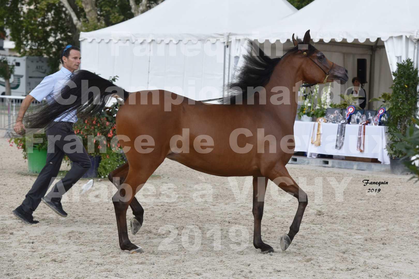 Championnat de France des chevaux Arabes en 2019 à VICHY - MADONNA J - 3