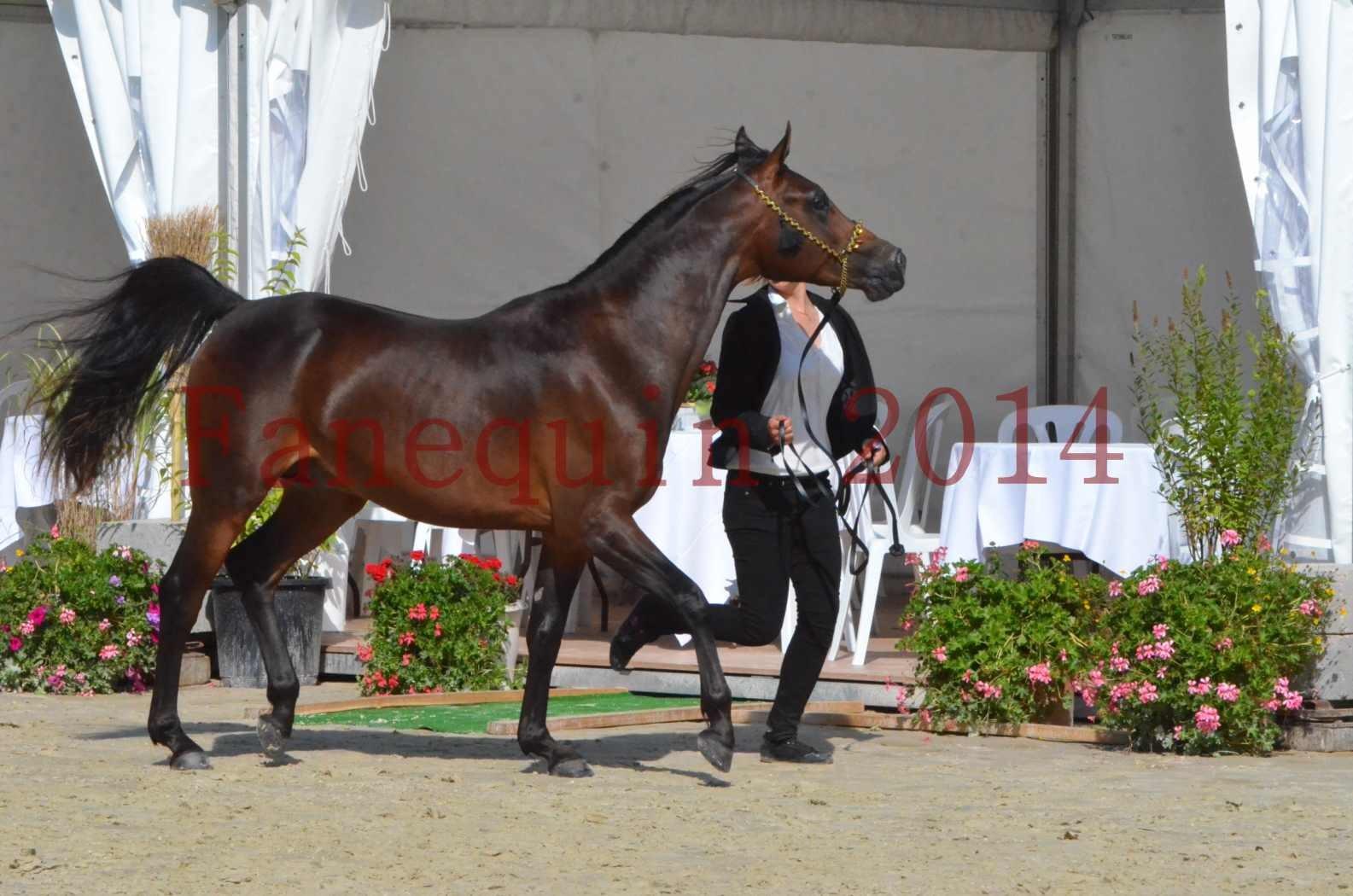Championnat de FRANCE 2014 - Amateurs - JA KHALEB - 26