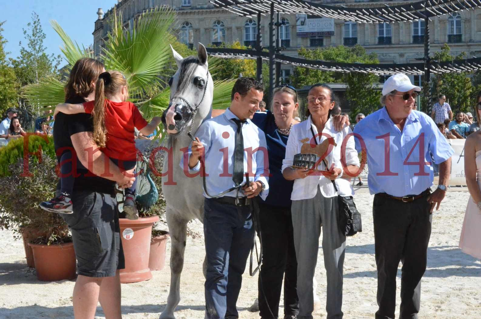 Concours National de Nîmes de chevaux ARABES 2014 - Championnat - SHAOLIN DE NEDJAIA - 48