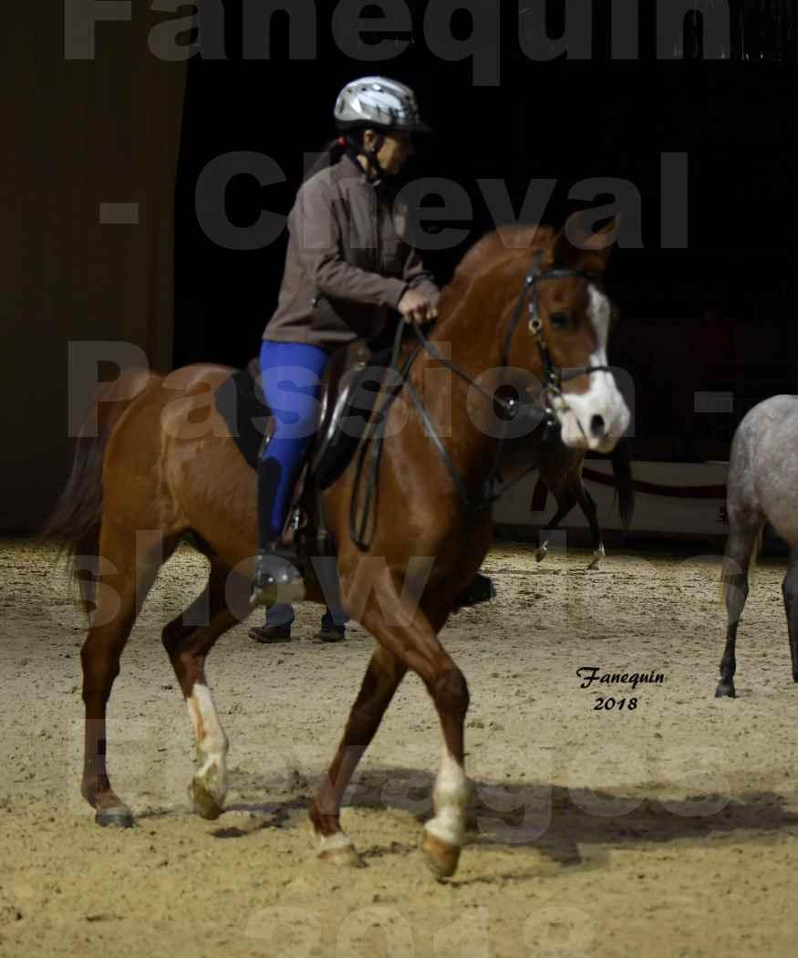 Cheval Passion 2018 - Show des Races - Cheval ARABES - monté