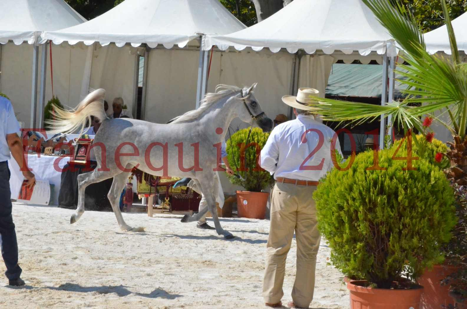 Concours national de Nîmes 2014 - Championnat Femelles Juniors - VOLODIA DE LAFON - 02
