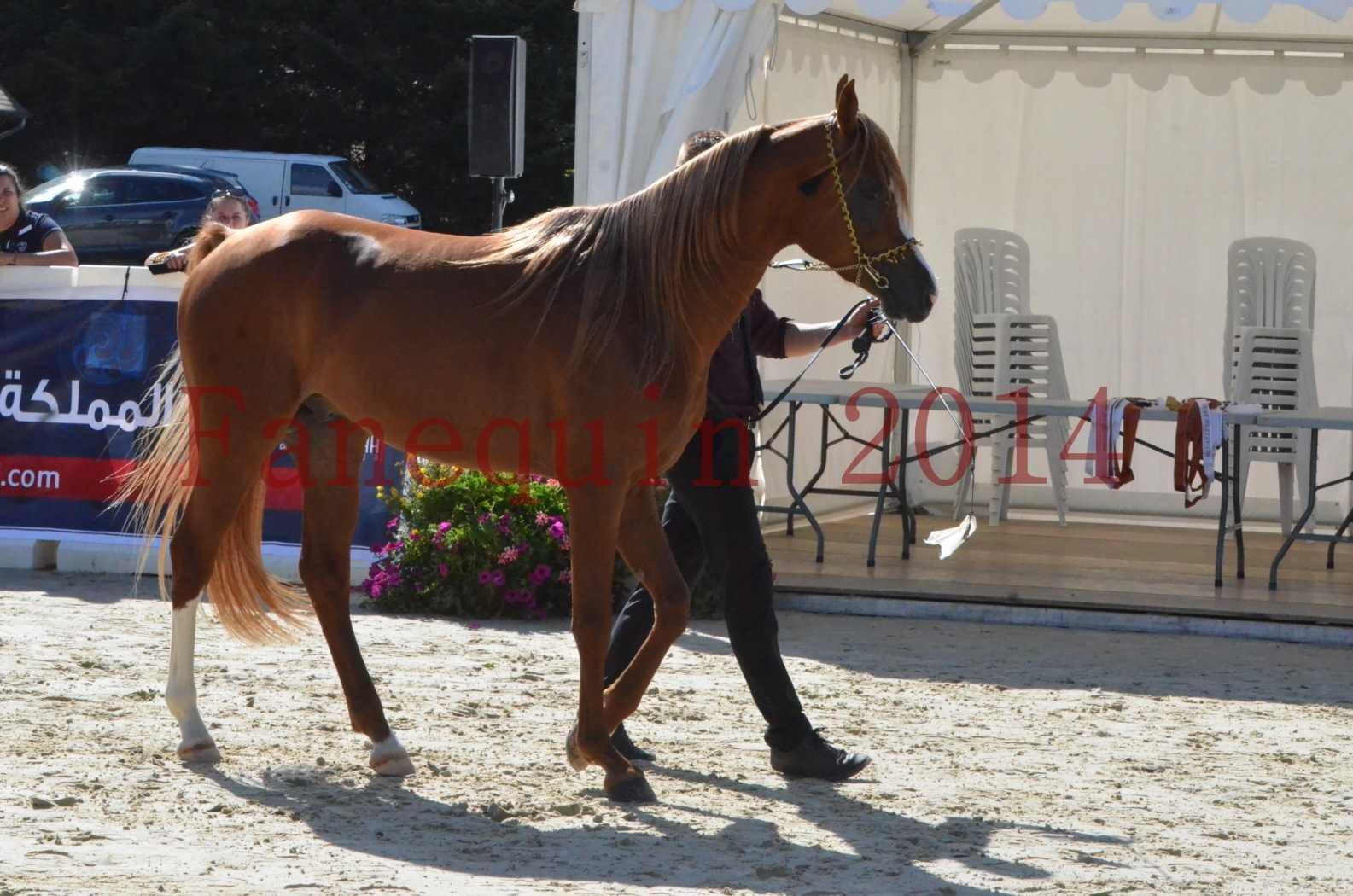 Championnat de FRANCE 2014 - Amateurs - SELECTO IBN SAMAWI - 023