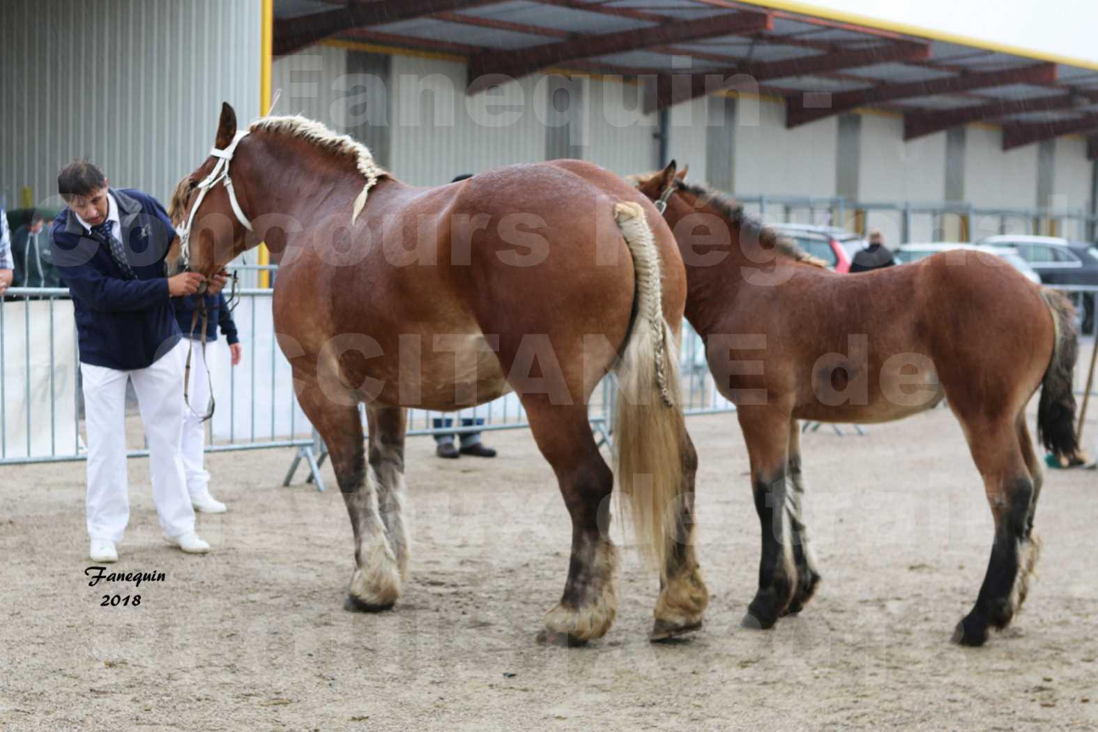 Concours Régional OCCITANIE de chevaux de traits à REQUISTA - DIANE DE GRILLOLES - 1