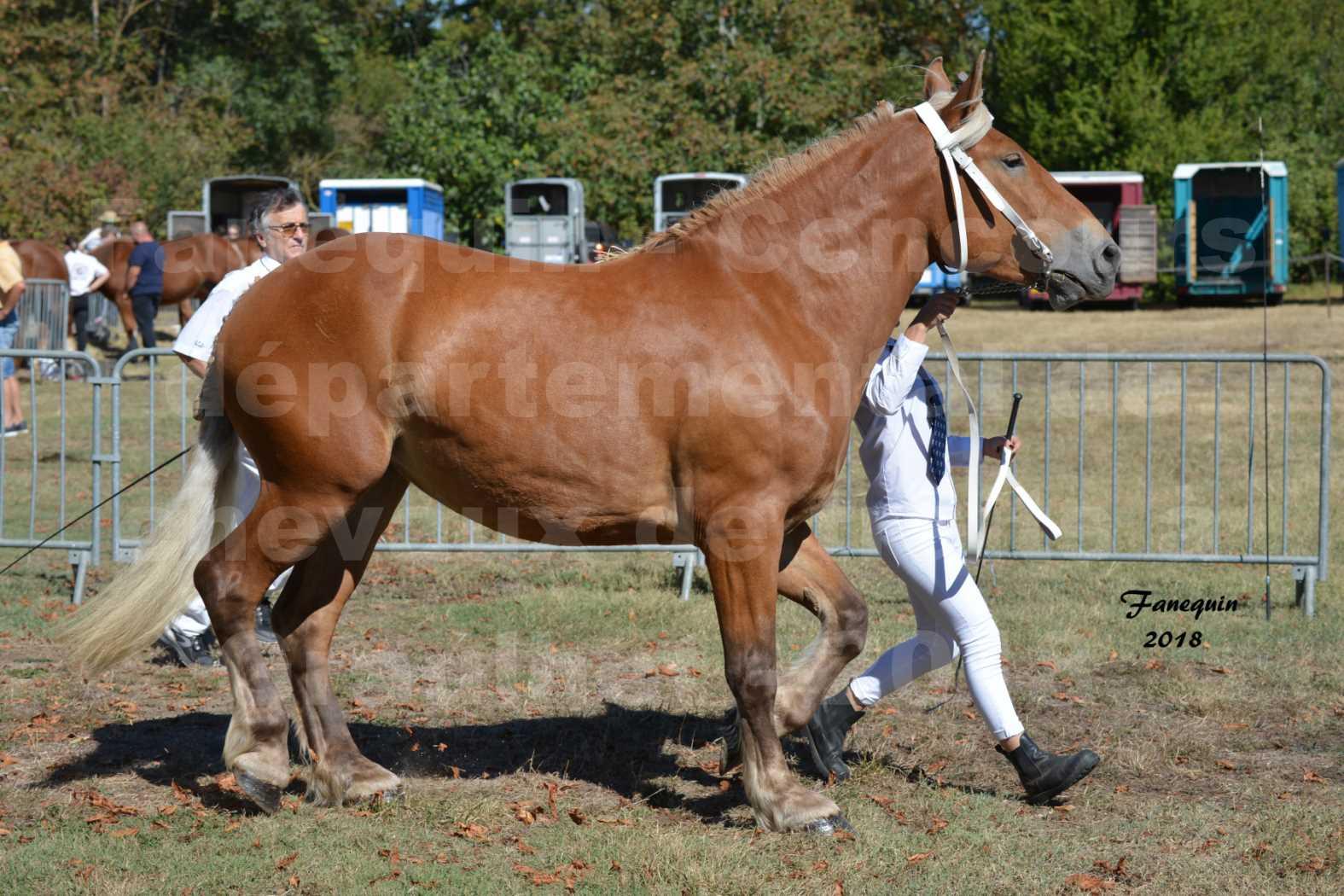 Concours départemental de chevaux de traits à GRAULHET en 2018 - Elevage POUJADE - Notre Sélection - 05