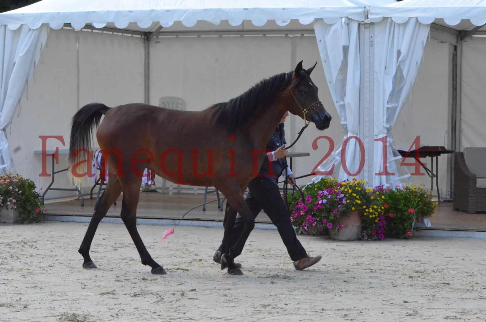 Championnat de FRANCE 2014 - Amateurs - KAL'ELLE D'ELHORIA - 26