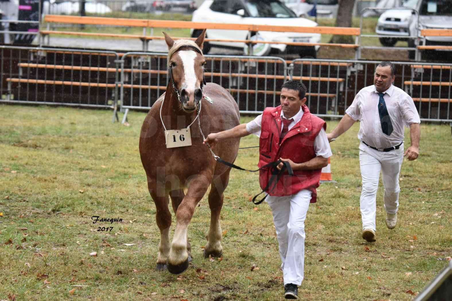 Concours Régional de chevaux de traits en 2017 - Trait ARDENNAIS - FLEUR D'ARIES - 05