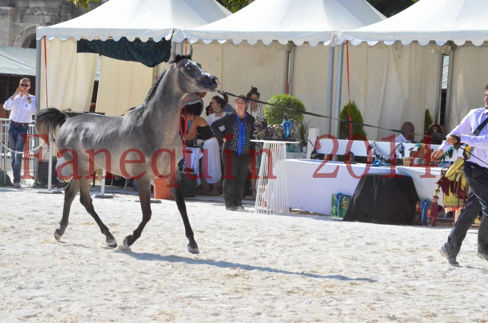 Concours National de Nîmes de chevaux ARABES 2014 - Championnat - JOSEPH'S BOUZIOLS - C 03