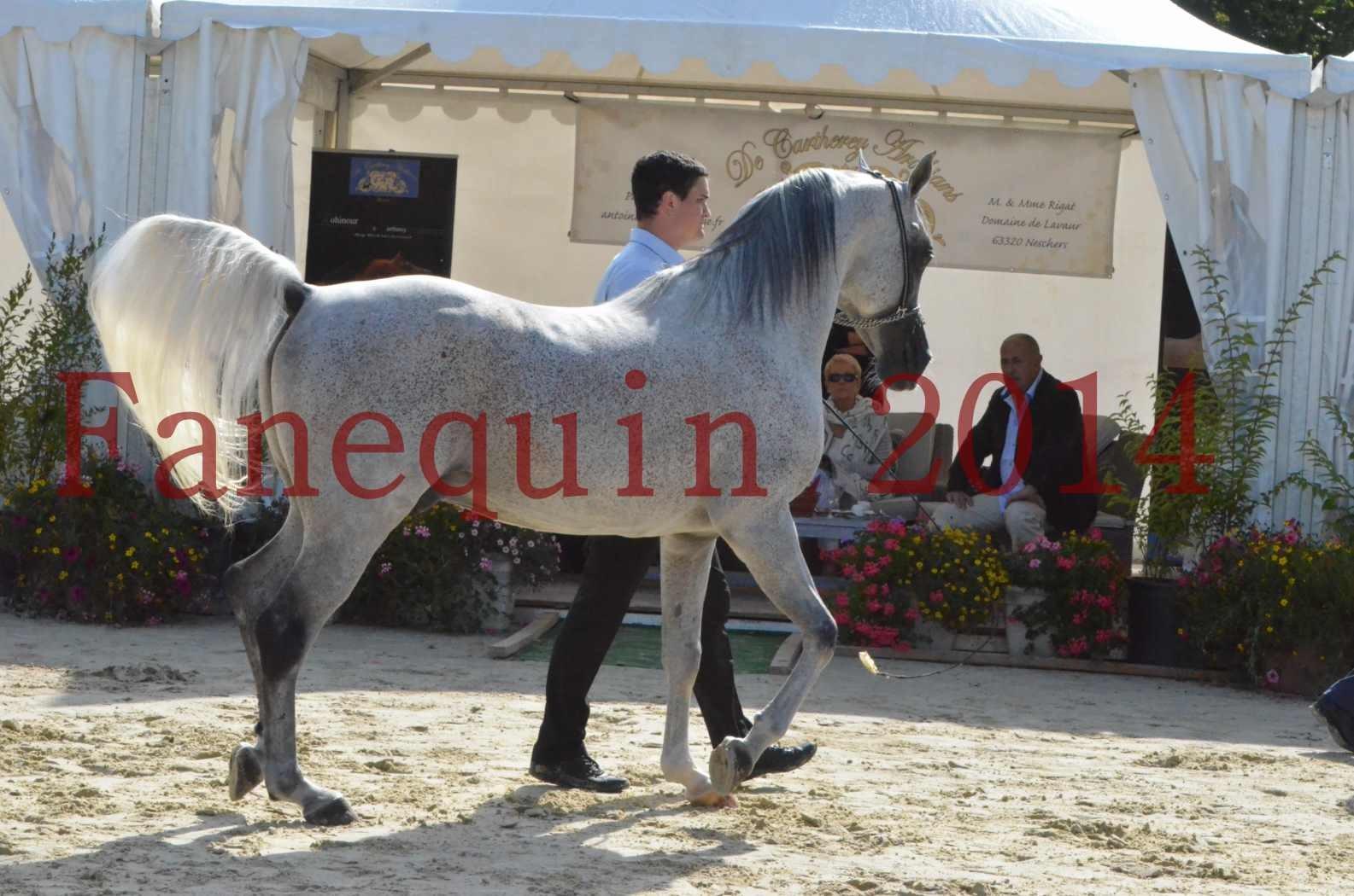 CHAMPIONNAT DE FRANCE  2014 A POMPADOUR - Sélection - SHEYK DE GARGASSAN - 06