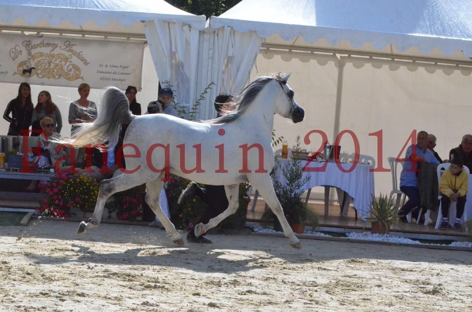 CHAMPIONNAT DE FRANCE  2014 A POMPADOUR - Sélection - SHAOLIN DE NEDJAIA - 52