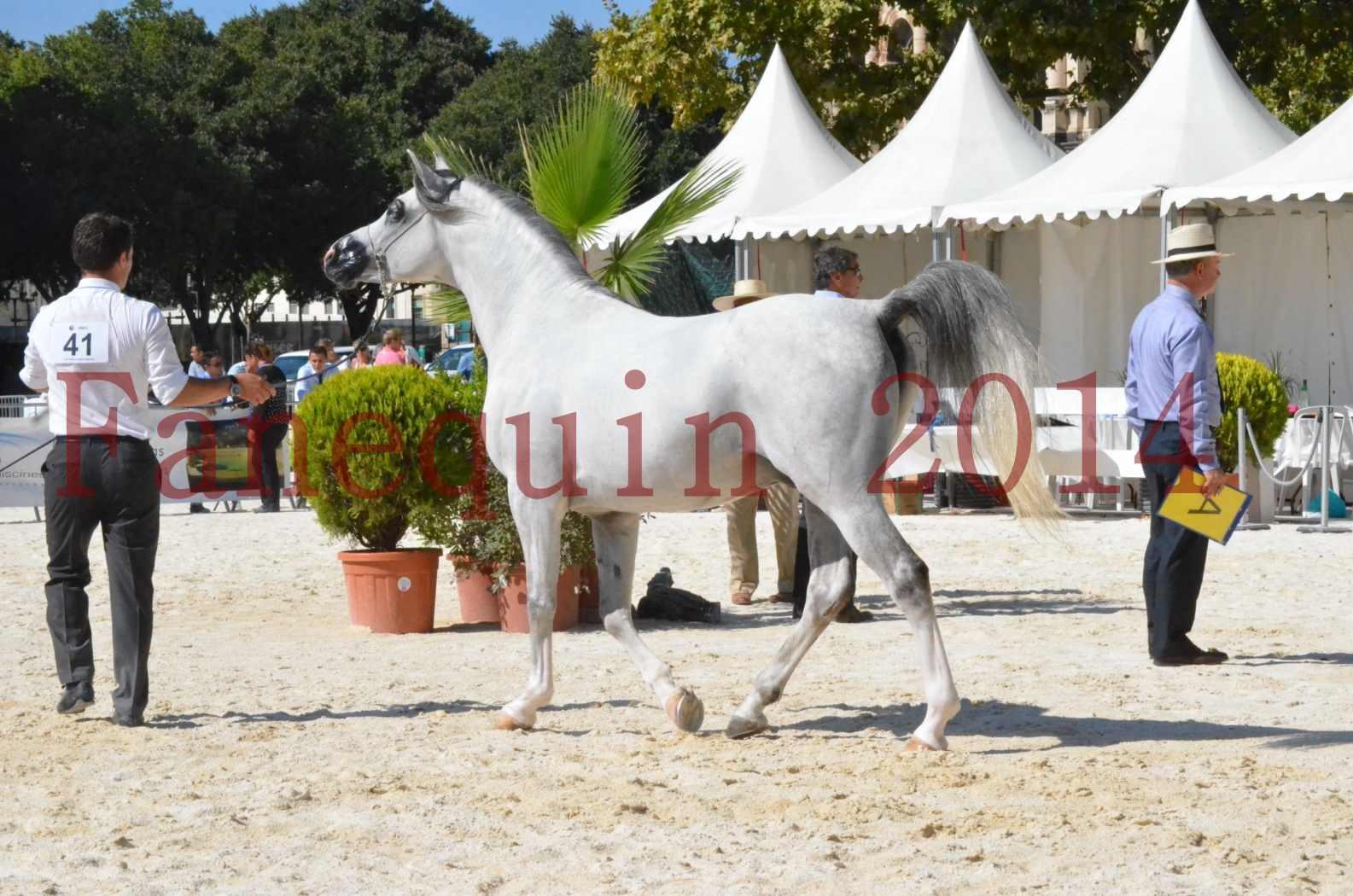 Concours National de Nîmes de chevaux ARABES 2014 - Sélection - SHAOLIN DE NEDJAIA - 18