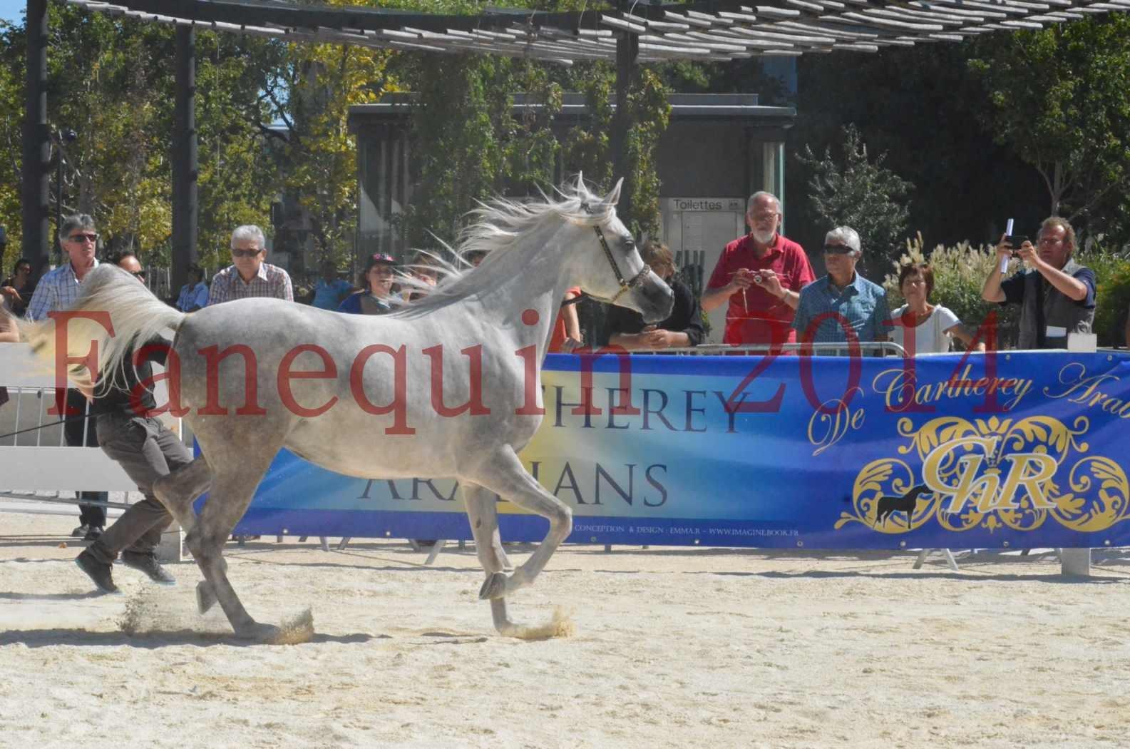 Concours national de Nîmes 2014 - Sélection  - VOLODIA DE LAFON - 14