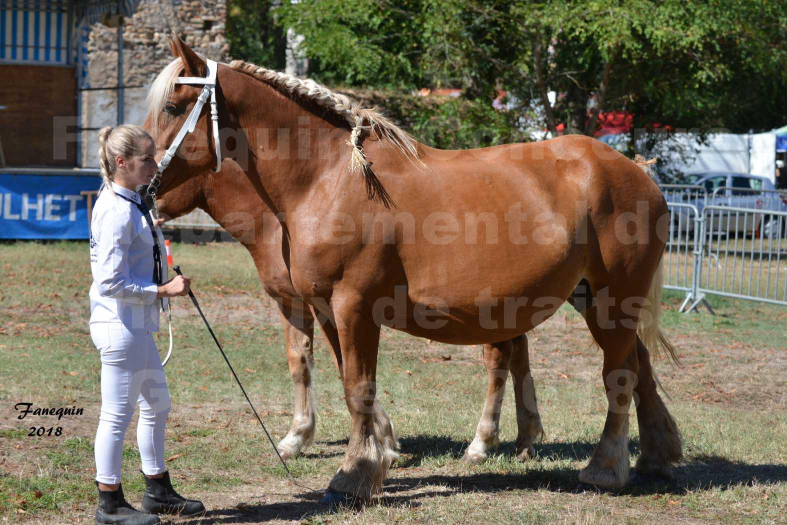 Concours départemental de chevaux de traits à GRAULHET en 2018 - Elevage POUJADE - Notre Sélection - 14