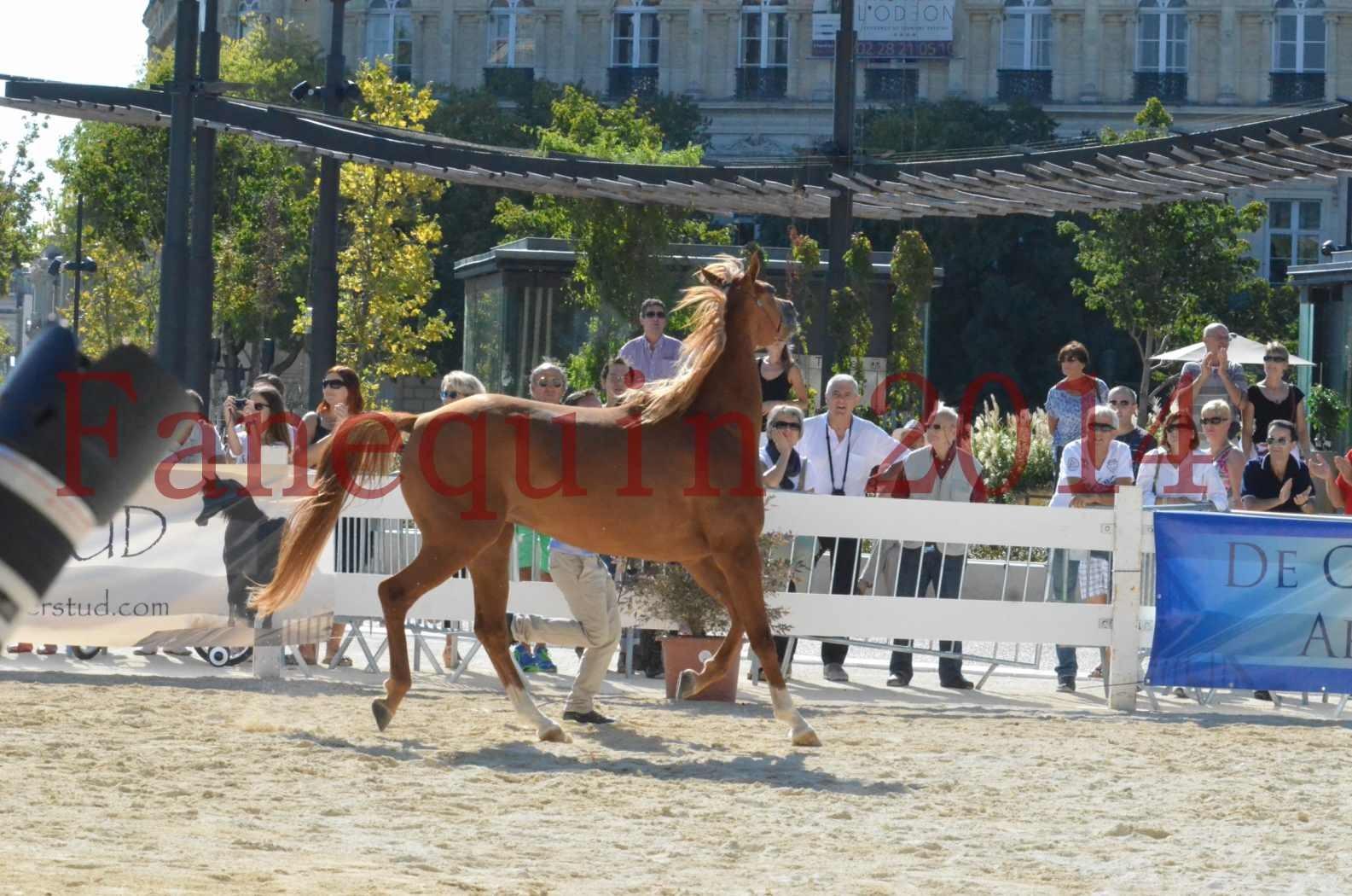 Concours National de Nîmes de chevaux ARABES 2014 - Championnat - MASSAI DE BARREL - 05
