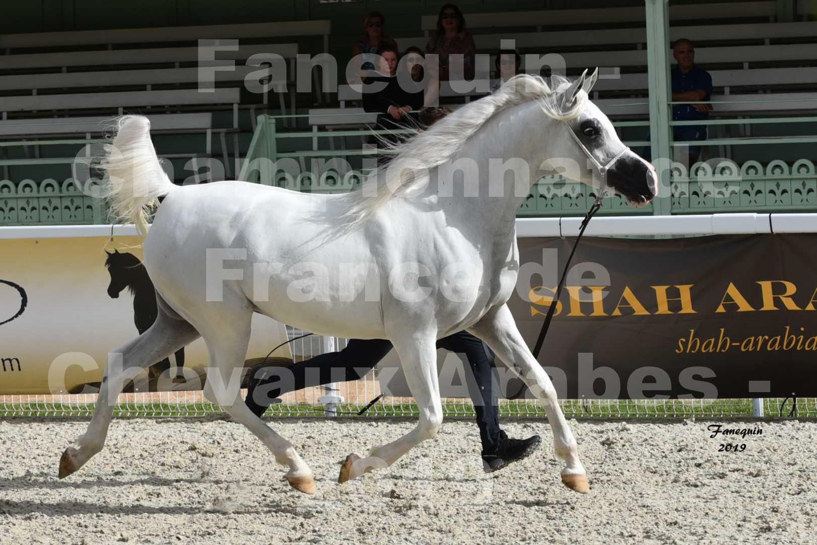 Championnat de France des chevaux Arabes en 2019 à VICHY - PIWNICIA NUNKI - 4