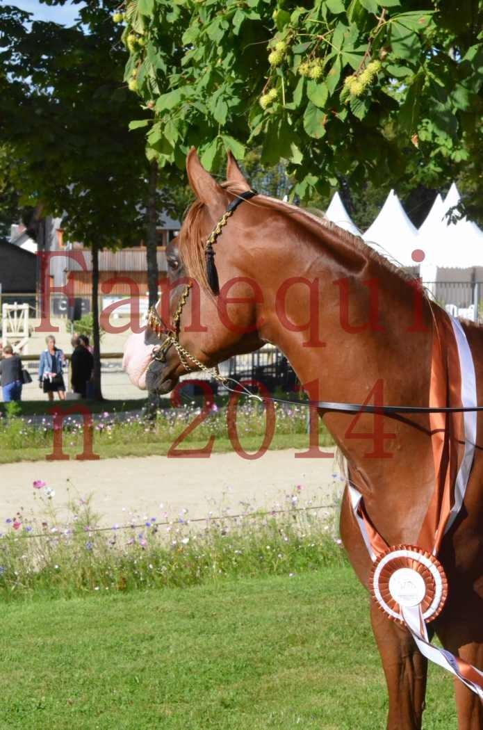 Championnat de FRANCE 2014 - Amateurs - SELECTO IBN SAMAWI - 201