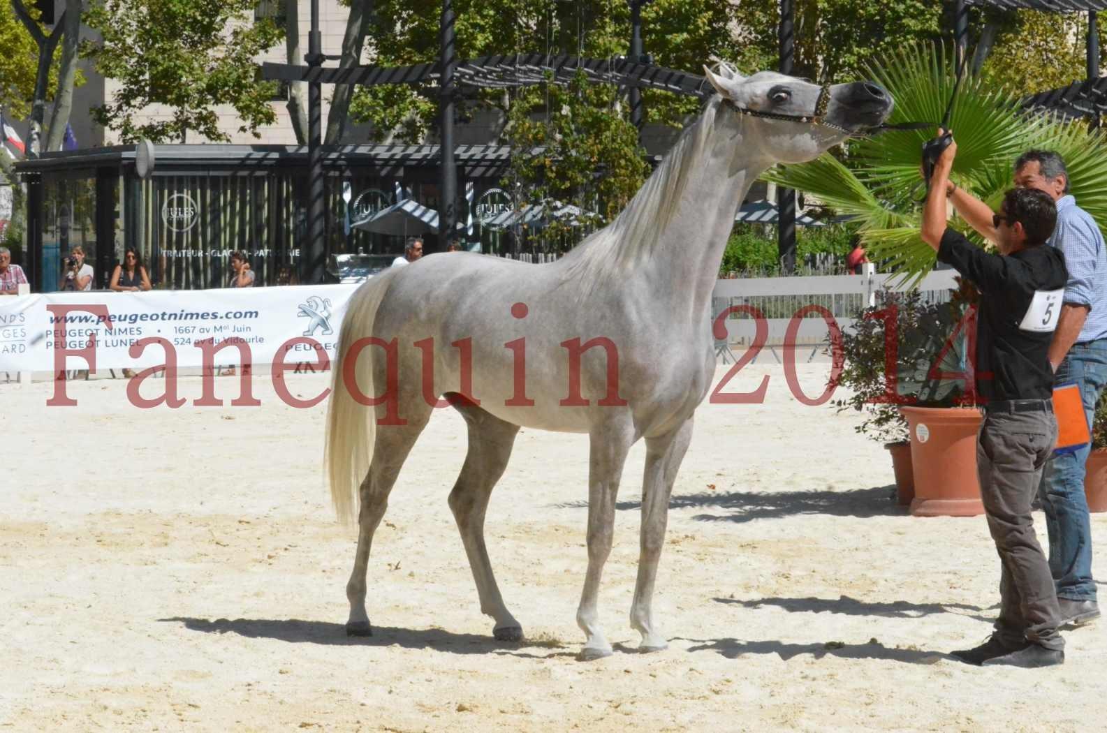 Concours national de Nîmes 2014 - Sélection - VOLODIA DE LAFON - 25