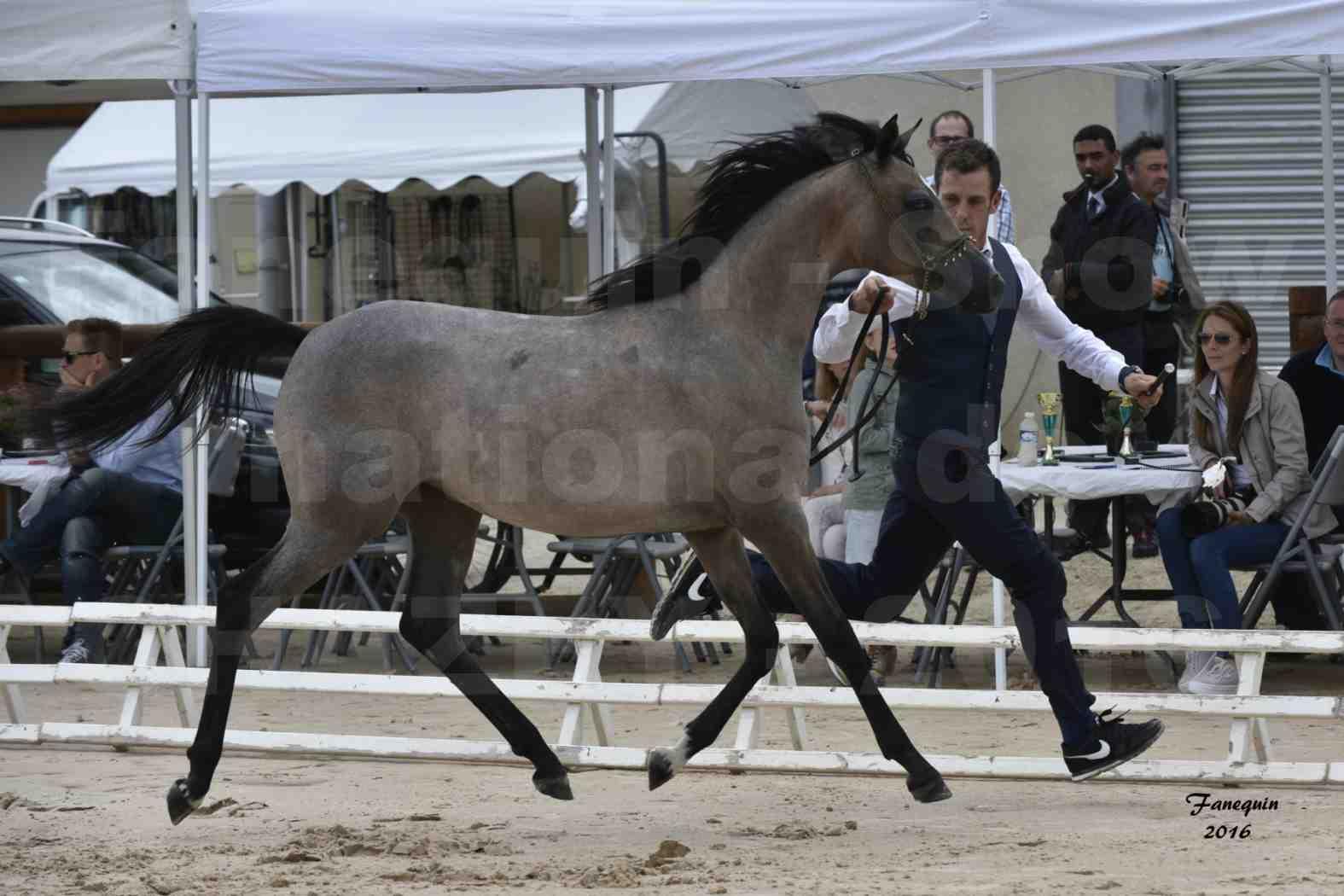 Show national de chevaux arabe de CHAZEY sur AIN - FALOUKA - 5