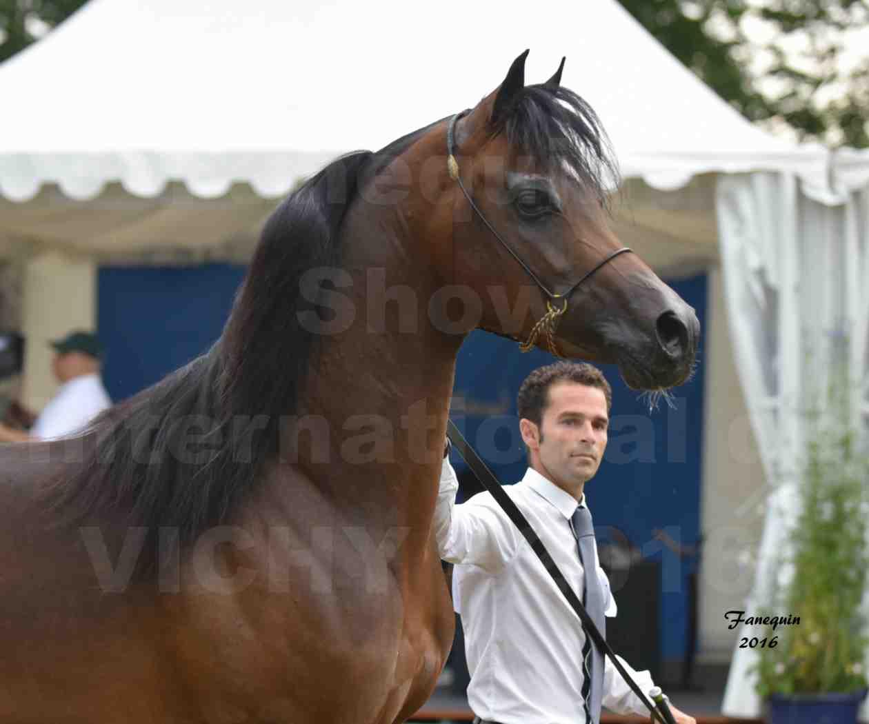 International Arabian Horse Show B de VICHY 2016 - MILLIAR - Notre Sélection - Portraits - 5
