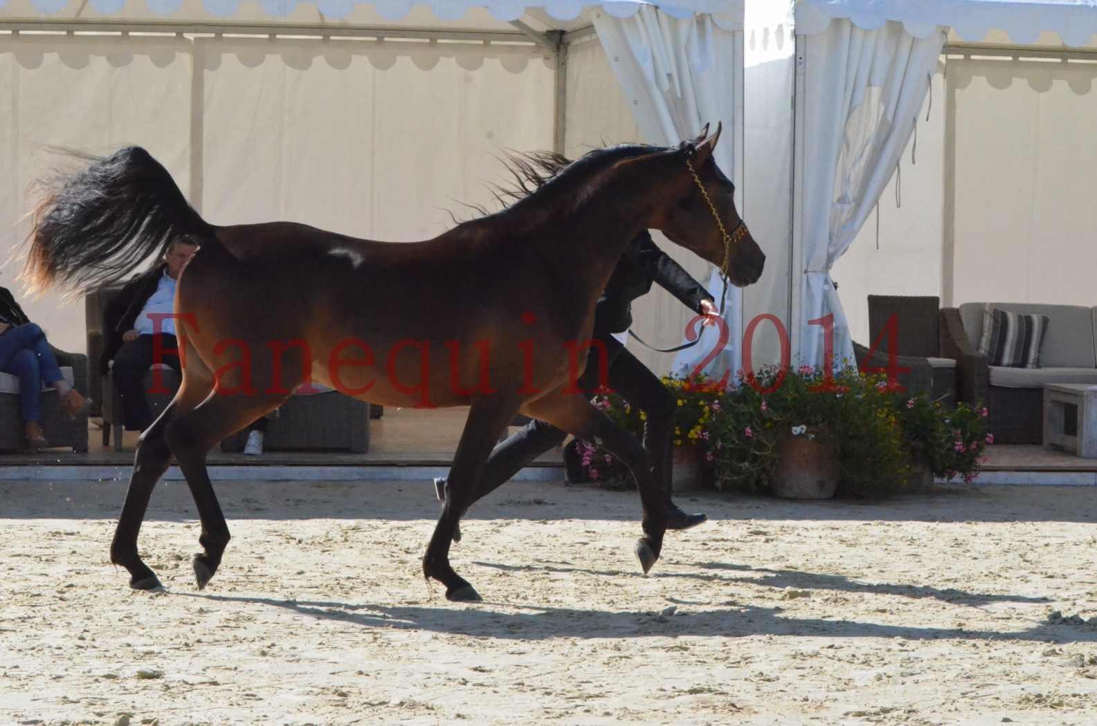Championnat de FRANCE 2014 - Amateurs - JA KHALEB - 11