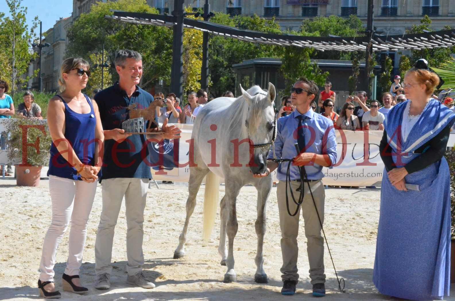 Concours national de Nîmes 2014 - Championnat Femelles Juniors - VOLODIA DE LAFON - 27