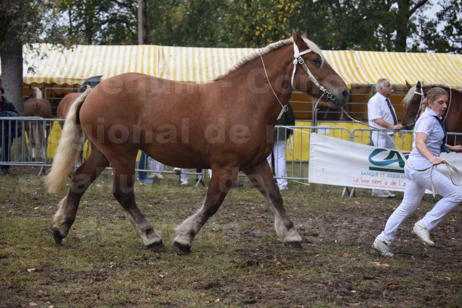 Concours Régional de chevaux de traits en 2017 - Trait COMTOIS - ELITE 14 - 15