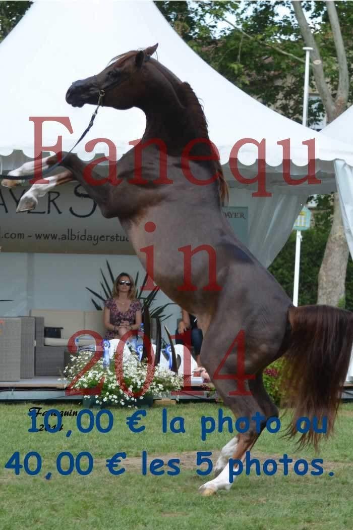 Parade des étalons - IM BAYARD CATHARE - se cabrant - 11 H