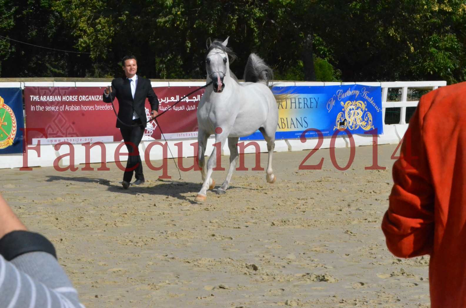 CHAMPIONNAT DE FRANCE  2014 A POMPADOUR - Sélection - SHAOLIN DE NEDJAIA - 51